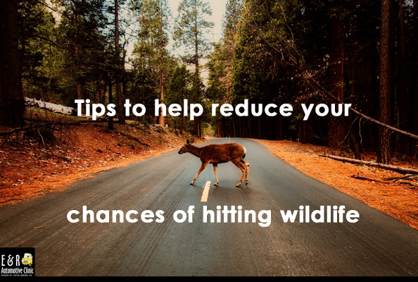 Tips to help reduce your chance of hitting wildlife from E&R Automotive Clinic